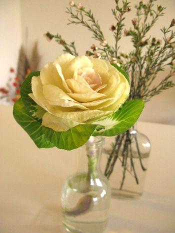 December_flower1