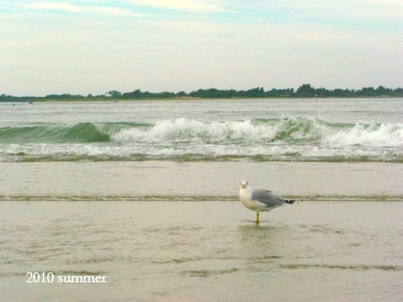 Crane_beach